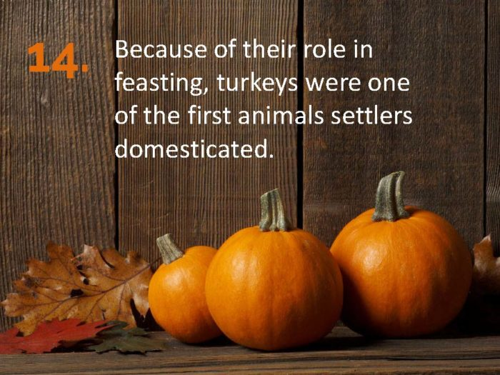 Delia Thanksgiving Fun Facts Page 14