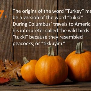 Delia Thanksgiving Fun Facts Page 17