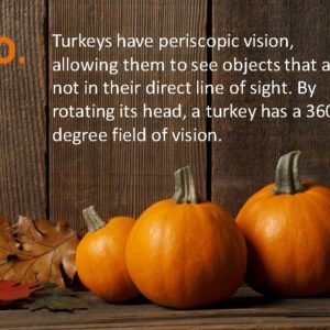 Delia Thanksgiving Fun Facts Page 20
